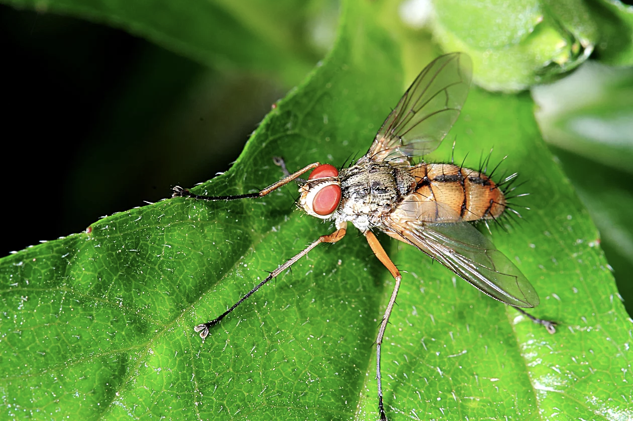 Are Fruit Flies Alive All Year?